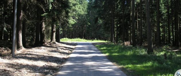 Trasa głównie prowadzi przez las
