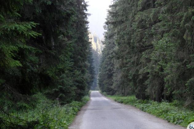 Większość trasy osłonięta lasem.