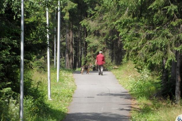 Jak zwykle z trasy korzystają głównie psy